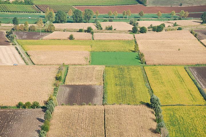 Affitti: l'On. Alberti appoggia la battaglia di Confagricoltura Brescia