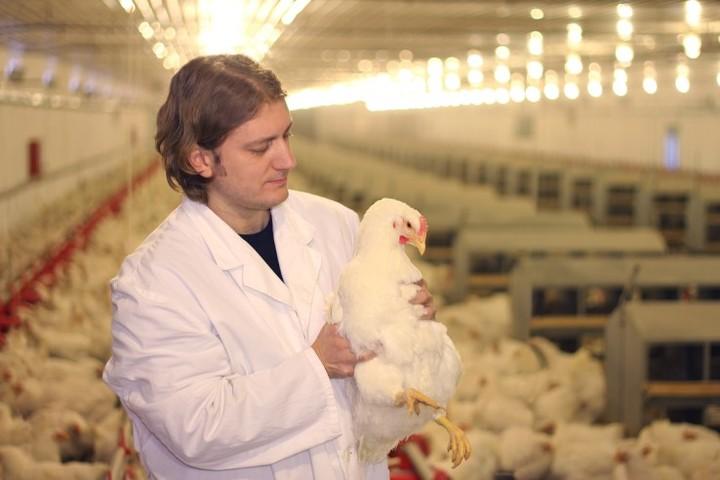 """Martinoni: """"Crediamo nell'avicoltura, il settore che davvero sfamerà il mondo nel prossimo futuro"""""""