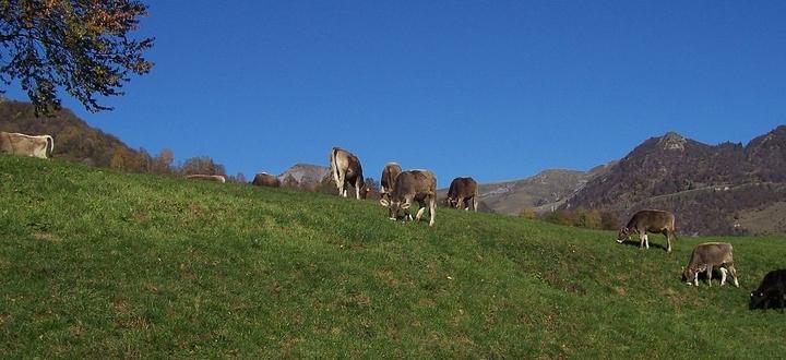 """Nuove regole per il pascolamento, Confagricoltura Brescia: """"Necessario incentivare l'agricoltura di montagna, bene l'operato della Giunta"""""""