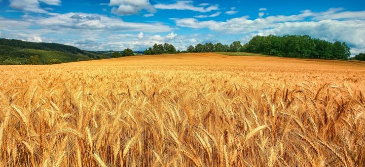 L'agricoltura italiana cresce del 16,8% dal 2009 al 2018