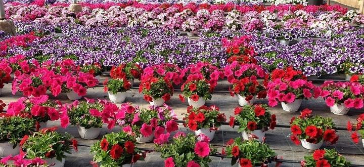 Procedura calcolo PLV danni settore floro comunicazione distruzione piante