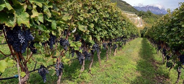 """Grave crisi per il mondo del vino, Garbelli: """"Subito azioni per garantire liquidità e per recuperare i mercati"""""""