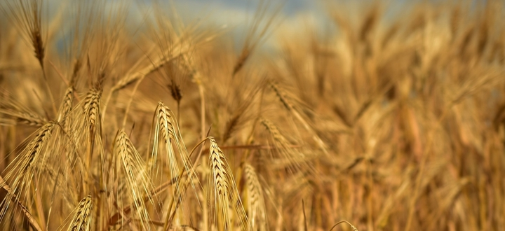 """Registro Cereali, Garbelli: """"Strumento utile per conoscere i flussi, ma senza inutili orpelli per le aziende agricole"""""""