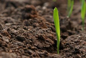 L'agricoltura lancia l'allarme
