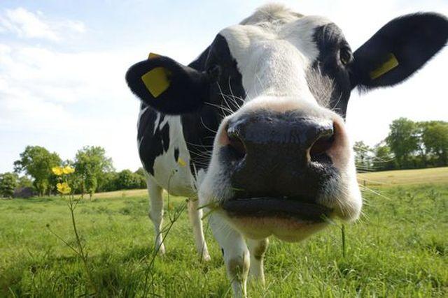 """Martinoni: """"Il latte? E' latte, punto""""."""