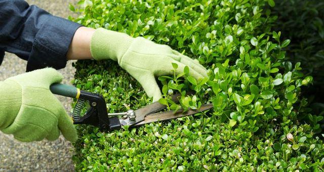 Novità sul regime giuridico dei materiali vegetali non pericolosi e degli sfalci e potature