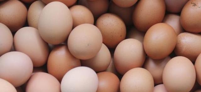 Timbratura delle uova all'origine, uno strumento di garanzia per gli allevatori bresciani e per tutti i consumatori