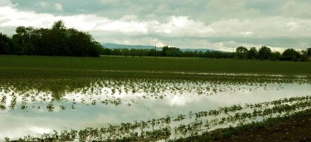 """Maltempo: gravi danni per le imprese agricole, """"va richiesto lo stato di emergenza per calamità naturale"""""""