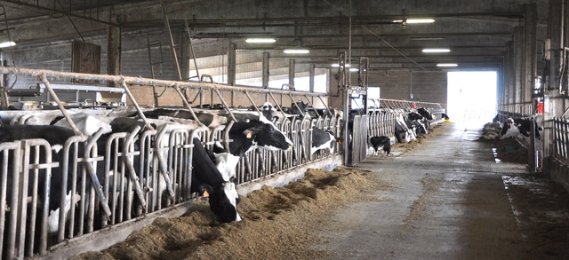 """Allevamenti bovini, due interventi del Consiglio regionale Garbelli: """"Positivo effetto della collaborazione avviata"""""""