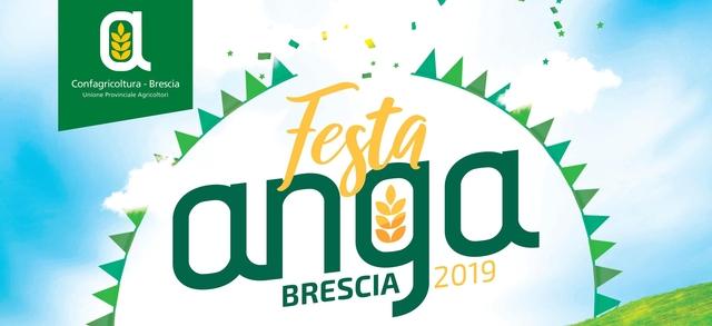 Festa Anga 2019