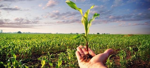 OGM tra verità e disinformazione