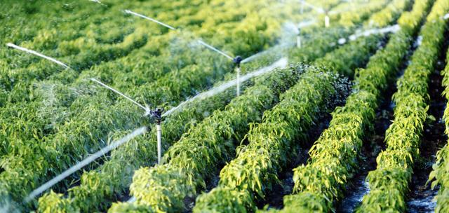 """Acqua, """"secondo Confagricoltura è fondamentale mantenere un approccio in scala di bacino ed il concetto dell'uso plurimo delle risorse"""""""