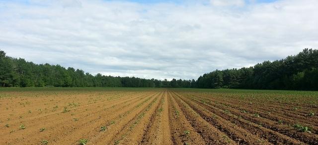 Senza avere fretta e in asciutta, è un avvio di stagione delle semine con il piede sollevato nelle campagne del Bresciano