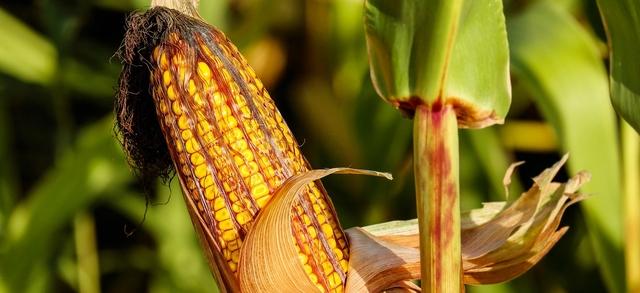Uno studio europeo conferma come l'uso delle Ngt può promuovere la sostenibilità della produzione agricola e del sistema alimentare, ora va rivista la normativa