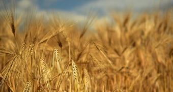 Cereali: novità registro telematico