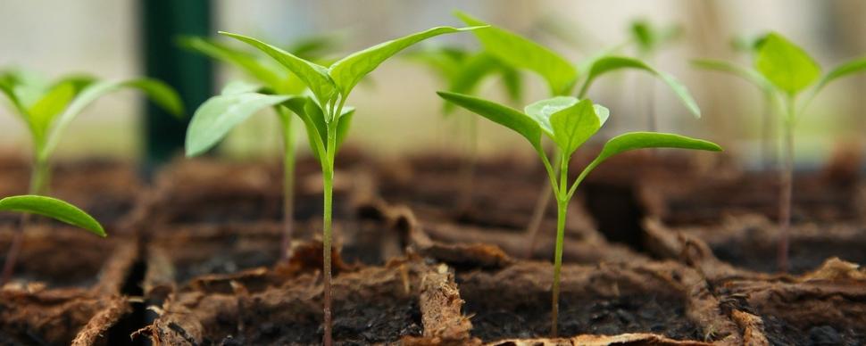Rinnovo Contratto Provinciale per operai agricoli