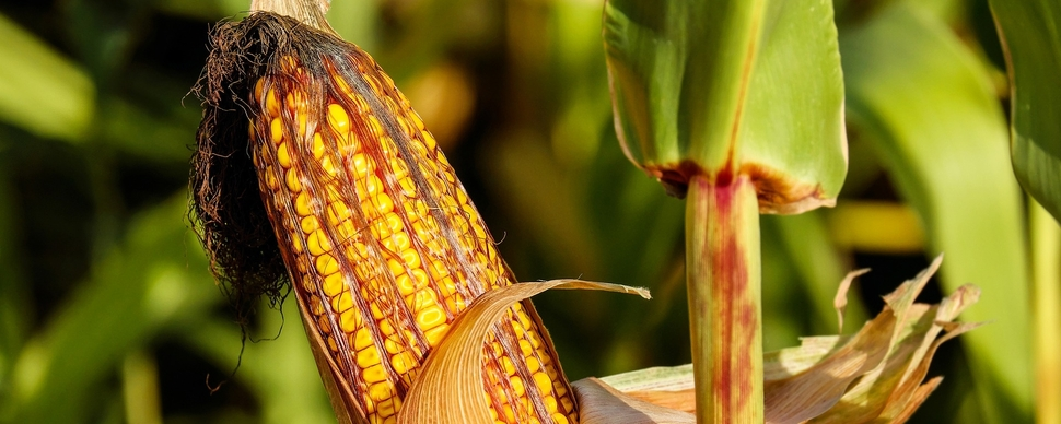 Ngt: sostenibilità della produzione agricola e del sistema alimentare