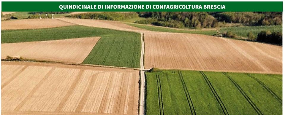L'Agricoltore Bresciano cambia look